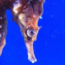 Avatar for frankteoh from gravatar.com